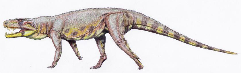 Polonosuchus